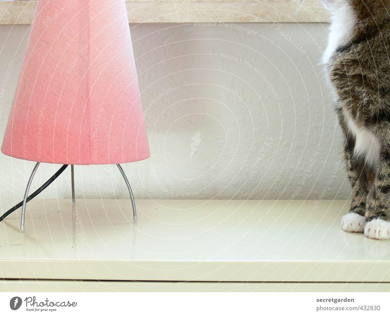 geschickt das modelrelease umgangen :) Häusliches Leben Wohnung Lampe Tisch Raum Tier Haustier Katze Fell Pfote hocken warten hell weich rosa weiß Geborgenheit