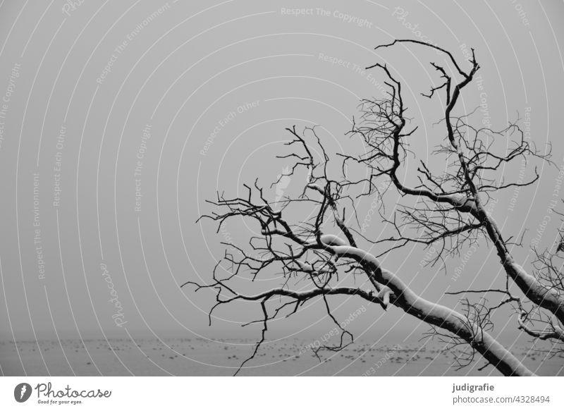 Mit Schnee bedeckte kahle Äste eines Baumes am See an einem trüben Wintertag kahler Baum Landschaft grau trist Wasser Natur Nebel Ruhe kalt Schwarzweißfoto Ast
