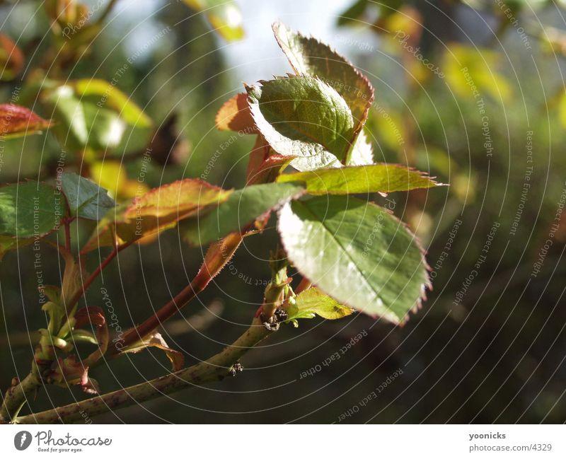 Blätter am Zweig Blatt Licht Ast Natur