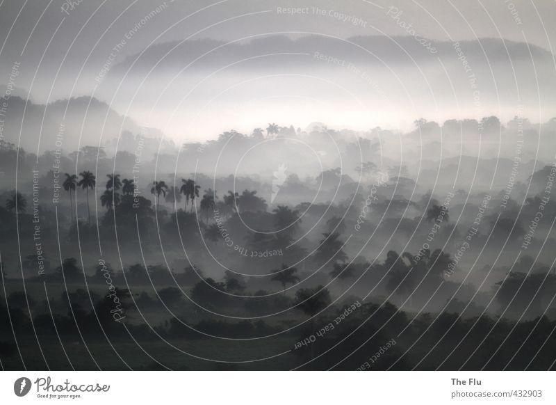 Schwarzweißmalerei Ferien & Urlaub & Reisen schön Sommer Baum Erholung ruhig Ferne Wald schwarz Berge u. Gebirge Freiheit träumen Tourismus Nebel Romantik