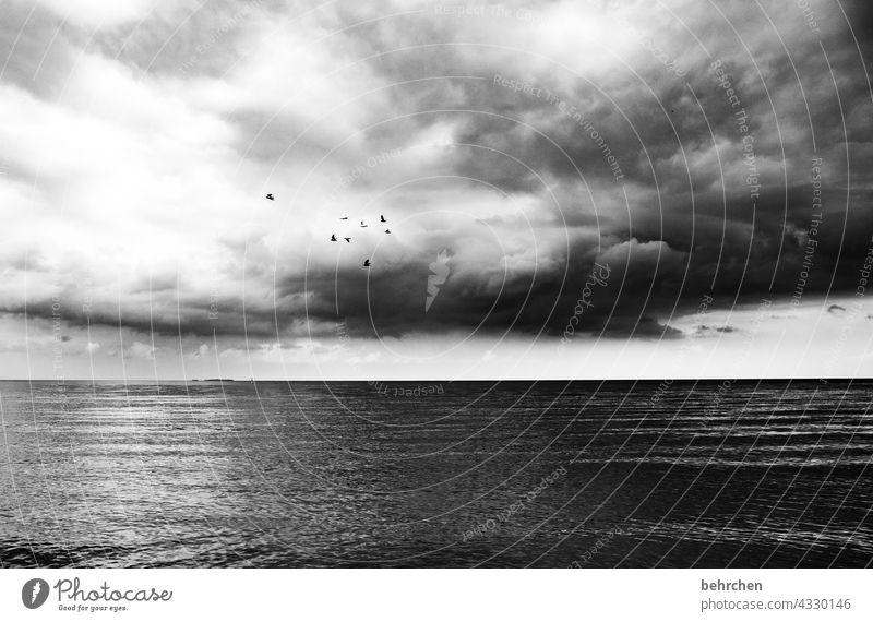 wolken, vögel und meer Erholung Deutschland Tourismus Sommer Mecklenburg-Vorpommern Ostseeküste Ferien & Urlaub & Reisen Außenaufnahme Küste Landschaft Strand