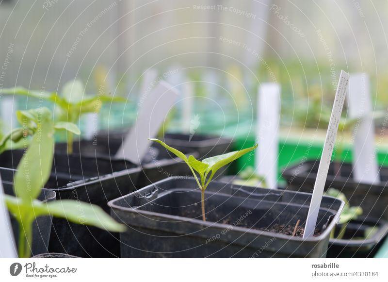Da haben wir den Salat  | neue junge Pflänzchen für Gemüse und Salat Aussaat gärtnern Pflanze Pflanzenzucht Topf Töpfchen Blumenerde Frühbeet Saatschale Anzucht
