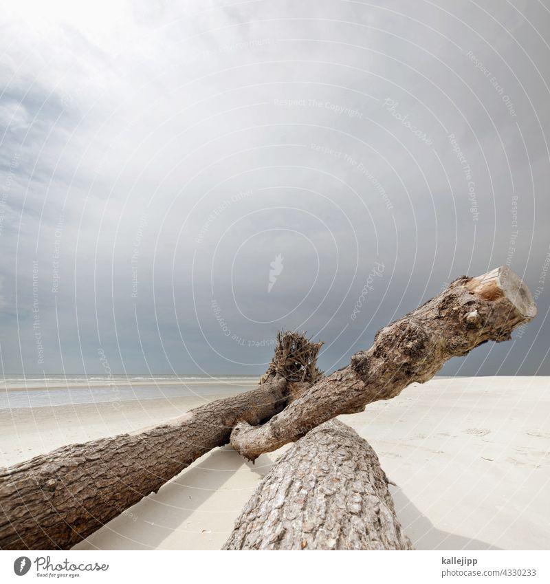 stamm am strand Strand Amrum Meer Treibgut Treibholz Baumstamm Ast Küste Natur Holz Wasser Außenaufnahme Sand Landschaft Farbfoto Himmel Menschenleer Tag Umwelt