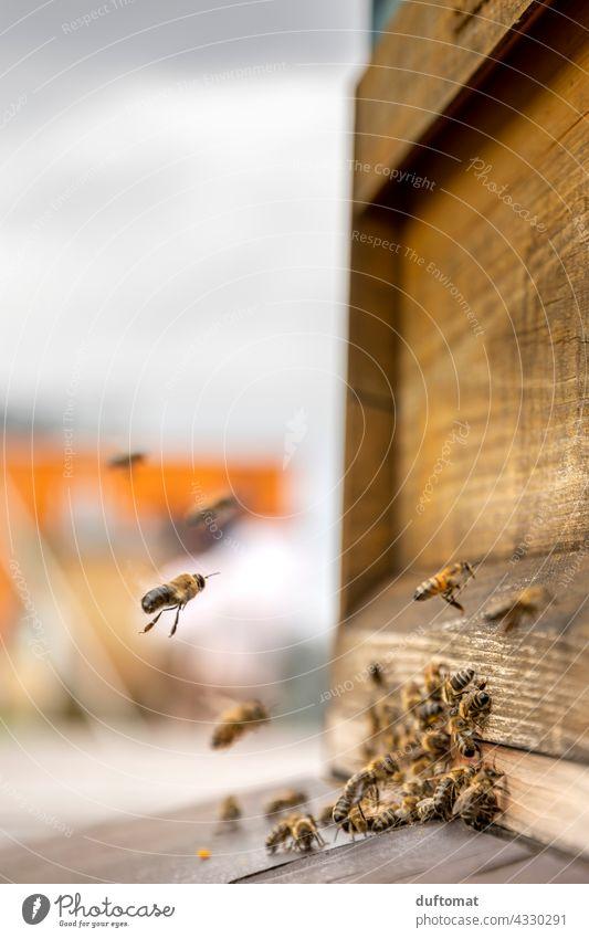 Makro Foto von Bienen vor Bienenstock natürlich Insekt Insekten Tier Makroaufnahme Nahaufnahme Flügel tiere Tiere in der Wildnis Pollen Außenaufnahme Nektar