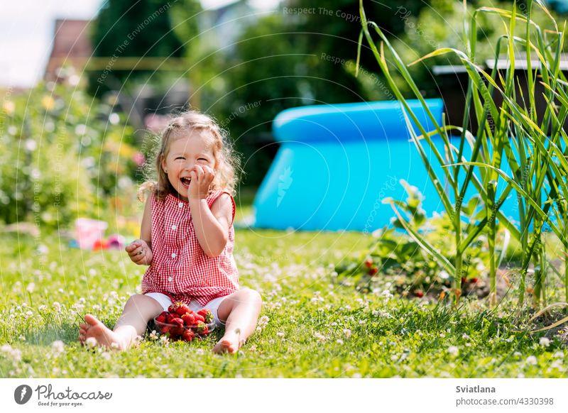 Ein charmantes kleines Mädchen sitzt auf dem Rasen im Garten, isst Erdbeeren und lacht. Sommer Hintergrund, ein Platz für Text Baby Essen Wiese Kleinkind