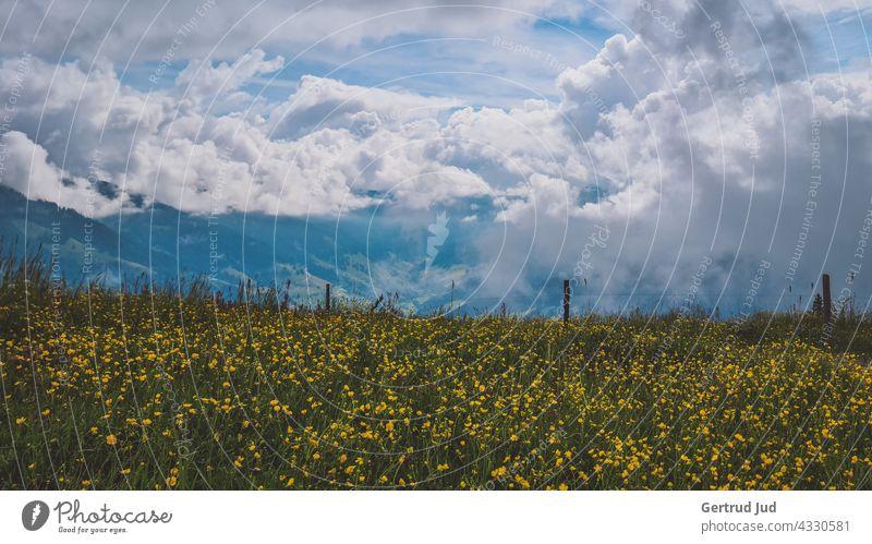Wolkenhimmel über einer blühenden Almwiese Grossarl Landschaft Natur Sommer Wandern Außenaufnahme Farbfoto Menschenleer Schönes Wetter Berge u. Gebirge Umwelt