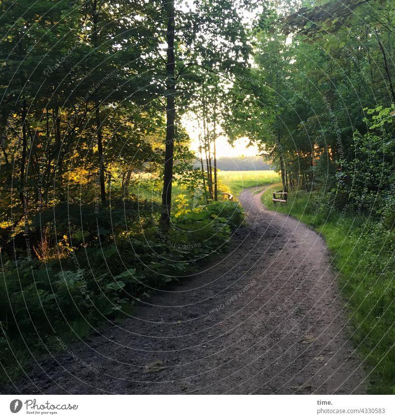 Abendspaziergang waldweg gelände büsche bäume baum sommer gegenlicht grün friedlich erholung genießen ruhe romantik sehnsucht naherholung lichtung