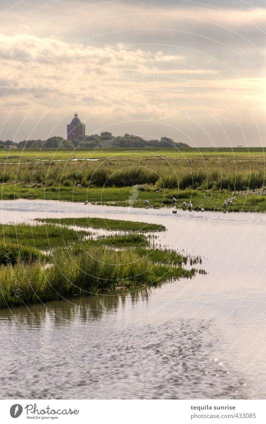Marsch Umwelt Natur Landschaft Pflanze Wasser Himmel Wolken Sonne Frühling Sommer Schönes Wetter Gras Sträucher Park Wiese Feld Flussufer Nordsee Insel Neuwerk