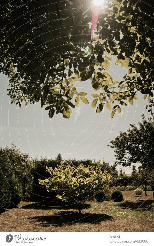 Sommer im Garten Umwelt Natur Landschaft Pflanze Wolkenloser Himmel Horizont Klima Wetter Schönes Wetter Baum Blatt Grünpflanze leuchten hell natürlich Wärme