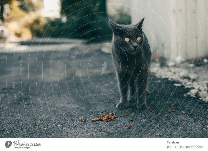 Obdachlose Katze frisst Spezialfutter auf einer Straße Tier Haustier katzenhaft heimatlos Katzenbaby Futter Porträt niedlich essen klein Lebensmittel im Freien