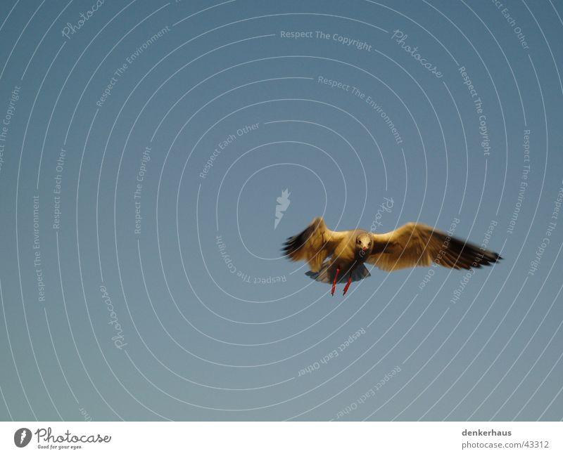 Der letzte seiner Art Himmel blau Bewegung Vogel Luftverkehr Feder Flügel Schwalben