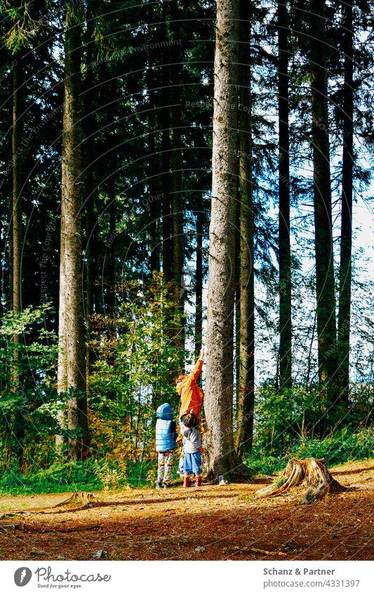 Erwachsene und Kinder an einem Baum im Wald Wanderung Familie Urlaub Baumstamm Natur Erlebnis erkunden Sommer Abenteuer im Freien reisen Landschaft Trekking