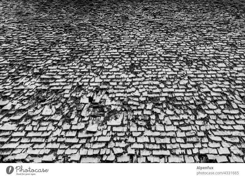 gut bedacht ? Dach Holz Holzdach Schindeldach Außenaufnahme Menschenleer Strukturen & Formen Dachziegel Gebäude historisch alt Haus Holzschindel Tag Muster