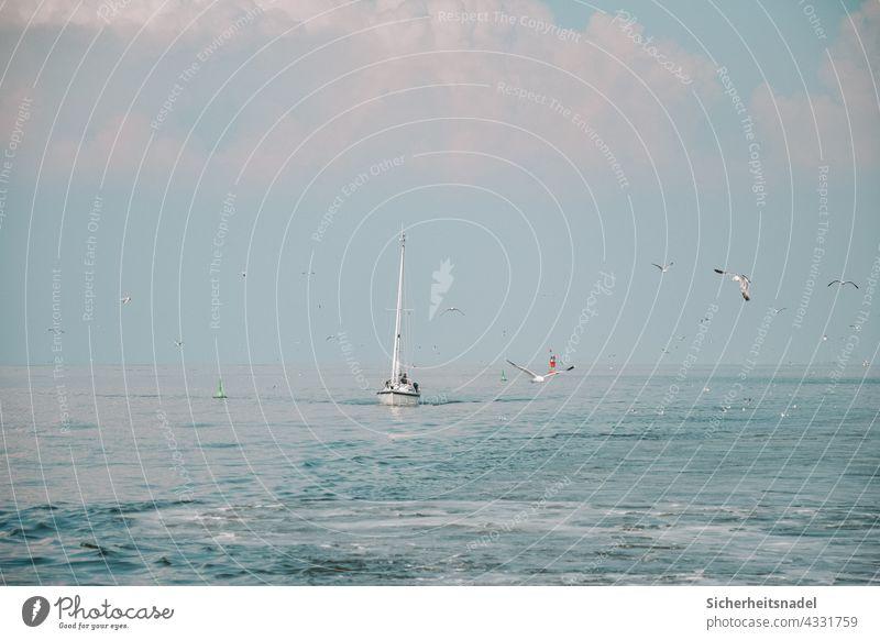 Segelboot auf der Nordsee Wasser Meer Segelschiff Außenaufnahme möwen Möwe Ferien & Urlaub & Reisen Segeln Sommer Freiheit blau Abenteuer Nordseeküste