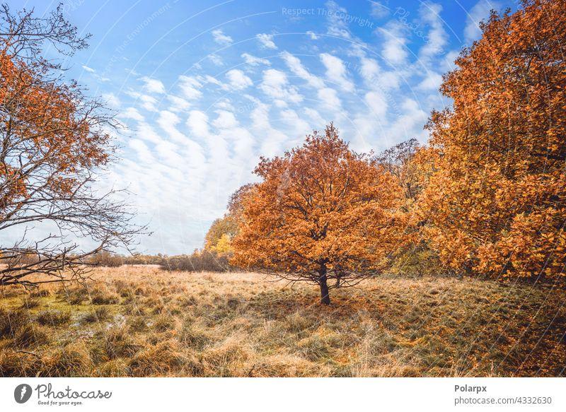 Bäume in orangefarbenen Herbstfarben in einem Sumpf hell Landschaft Berge u. Gebirge Herbstlaub tote Blätter ruhig Stille Feuchtgebiete ruhen Reise Pause