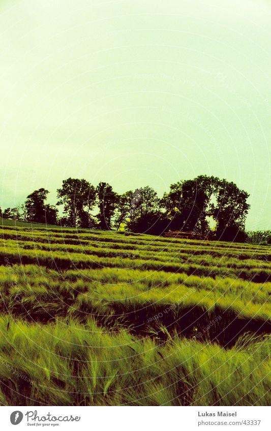 ser un campo muy amplio Sommer Frühling Landschaft Feld frei