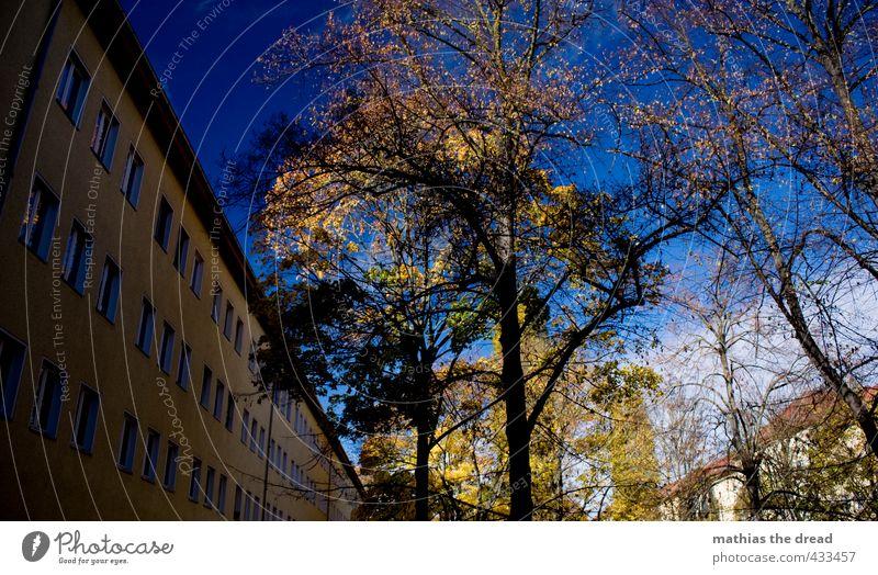 HERBST IM INNENHOF Umwelt Natur Landschaft Himmel Wolken Herbst Schönes Wetter Baum Blatt Garten Stadt Haus Gebäude Architektur Mauer Wand Fassade Fenster schön