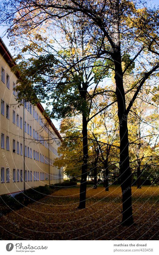 INNENHOF Umwelt Natur Himmel Herbst Schönes Wetter Baum Gras Park Stadt Haus Gebäude Architektur Fenster schön Innenhof Fassade Reihe Linie Herbstlaub
