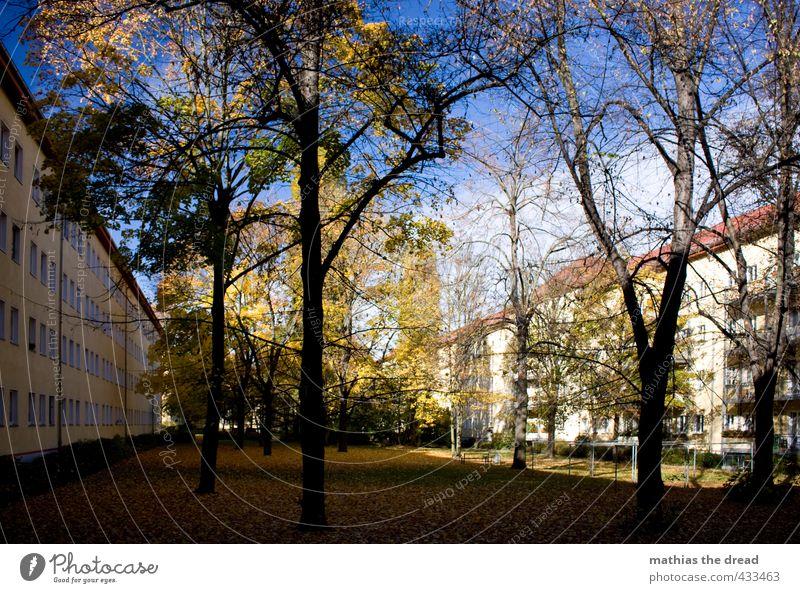 INNENHOF Umwelt Natur Himmel Wolken Herbst Schönes Wetter Pflanze Baum Haus Bauwerk Gebäude Architektur schön Innenhof Garten herbstlich mehrfarbig Blatt