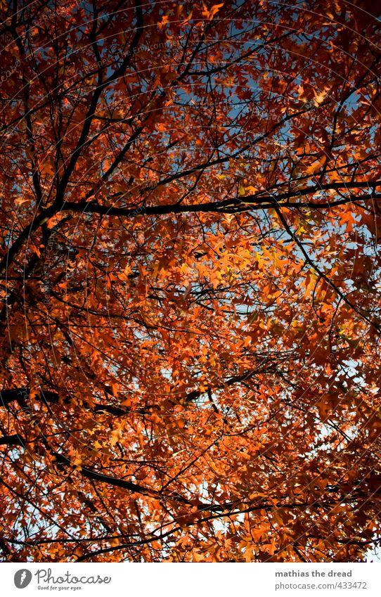 ER IST DA, DER HERBST! Umwelt Natur Pflanze Himmel Herbst Schönes Wetter Baum Blatt Grünpflanze Park schön Blätterdach färben Herbstlaub rot orange leuchten