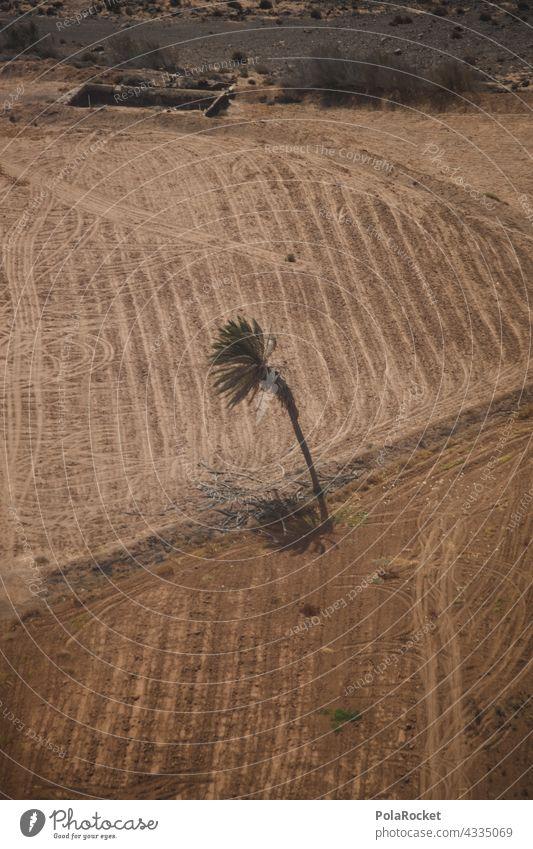 #A# Palmen Überflieger Palmenwedel Oberfläche Vogelperspektive Drohnenansicht Drohnenaufnahme Drohnenfoto Drohnenbilder drohnenflug Drohnenfotografie
