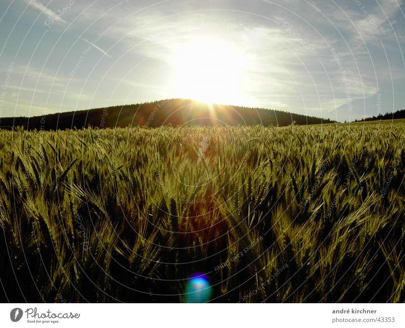 gedeien Himmel Sommer Berge u. Gebirge Feld Getreide Hügel Roggen