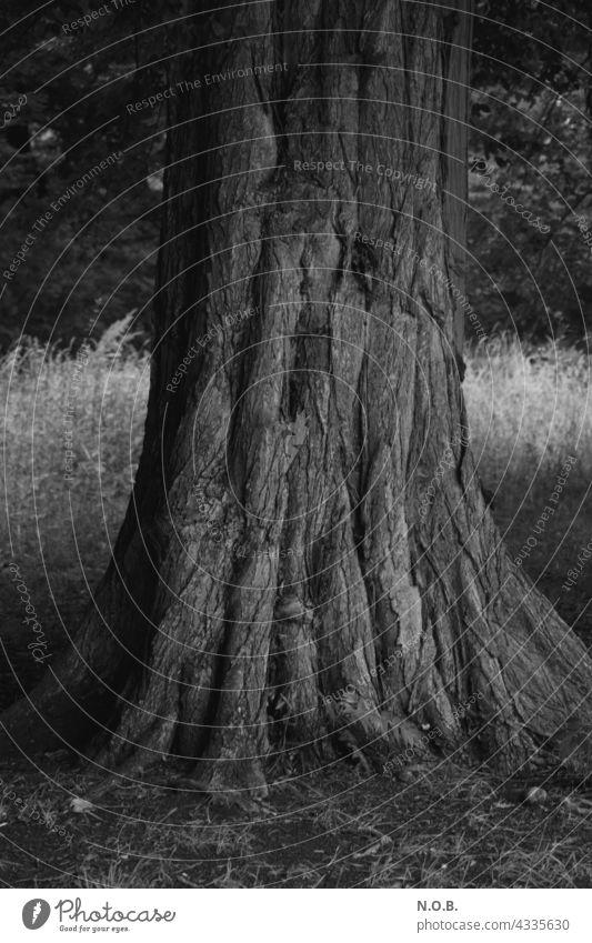 Baumstamm in Schwarzweiss Stamm alt Schwarzweißfoto schwarzweiß schwarzweiss Außenaufnahme sw menschenleer grau Menschenleer Natur Furchen zerfurcht Kraft