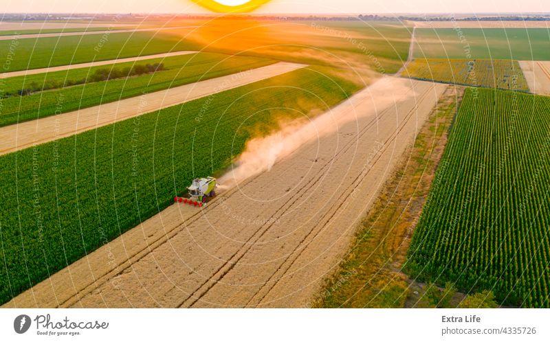Blick von oben auf Mähdrescher, Erntemaschine, erntereifes Getreide bei Sonnenuntergang landwirtschaftlich Ackerbau Müsli Land Landschaft kultiviert