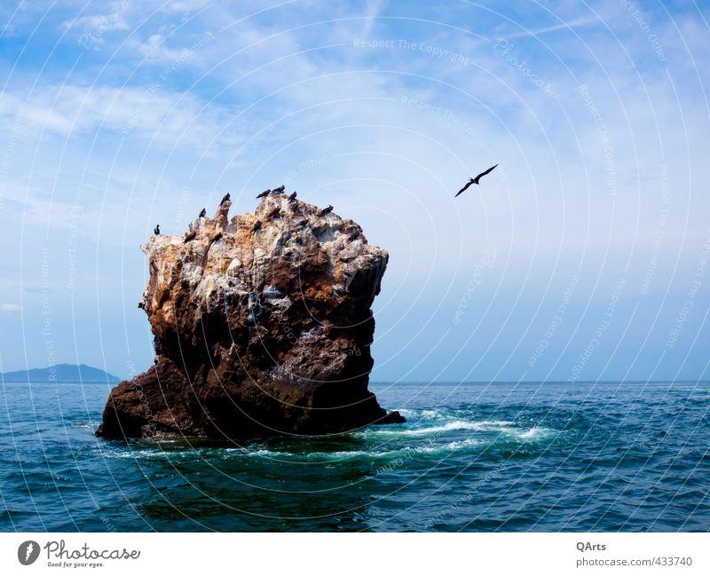 Vogelinsel Himmel Natur Ferien & Urlaub & Reisen Wasser Meer Wolken Tier Ferne Freiheit Felsen Luft fliegen Wellen Tourismus Insel