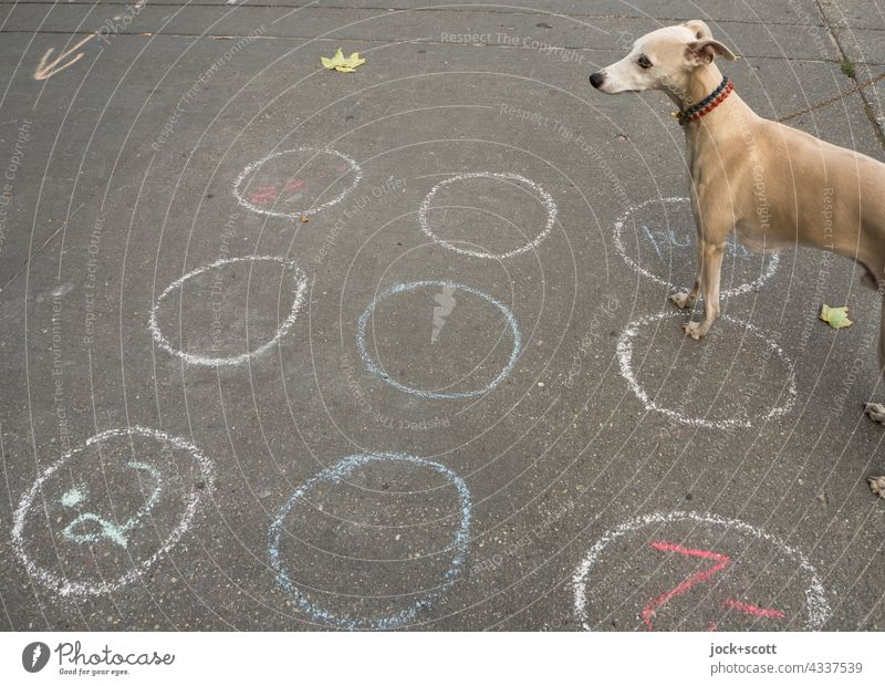 gezeichnet & gemalt | Himmel und Hölle ein Hüpfspiel für den Hund Spiel Spielen Haustier Windhund Whippet Kreidezeichnung Asphalt Boden Ziffern & Zahlen
