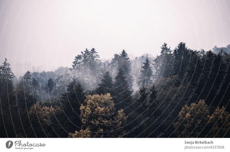 Düstere Waldlandschaft mit verschiedenen Bäumen, Mischwald im Nebel wälder bäume baum nadelwald laubwald mischwald nebel stimmung wetter Herbst Laubwald