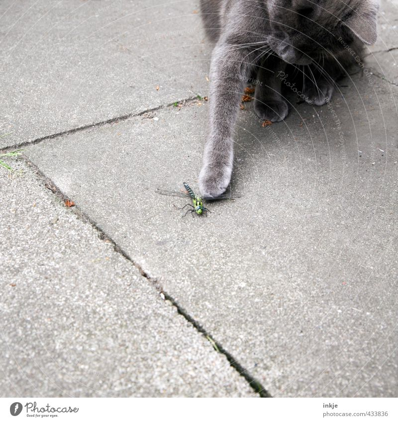 ...... Katze Tier Gefühle Tod Spielen Wildtier Beton bedrohlich Neugier festhalten Todesangst fangen Jagd Haustier Terrasse Interesse