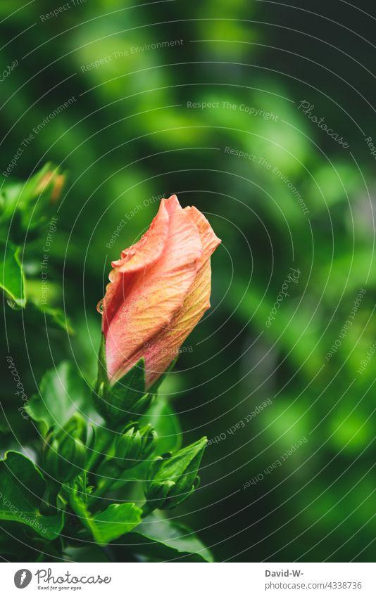 Blüte vor der Entfaltung verschlossen Frühling Struktur Form Kunstwerk Naturphänomene Blume Künstlerisch geschwungen besonders Design