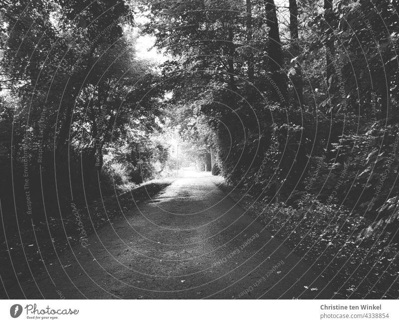 Ein Weg in einem dunklen Wald führt hinaus in die Helligkeit, schwarz-weiß Waldweg Waldstück dunkel hell Ausweg Spazierweg Spaziergang Fahrradweg Natur Baum