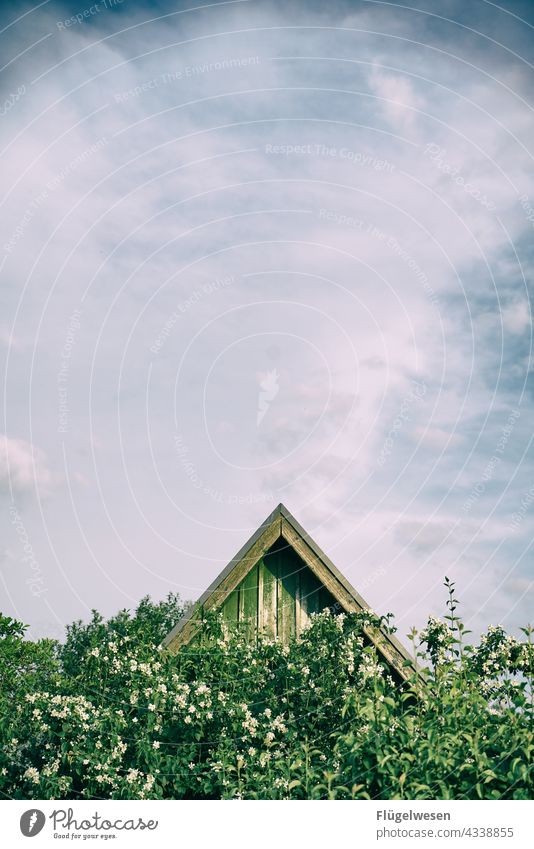 Einfach spitze Dach Haus Ferienhaus Garten Gartenhaus Urlaub Himmel Büsche gebüsch Spitze Holz Bretter