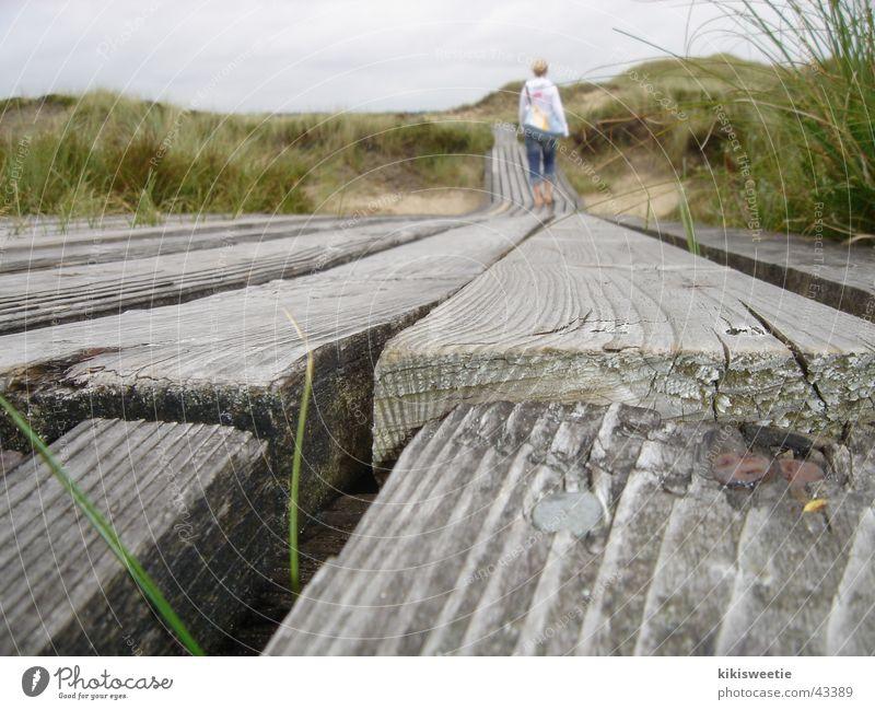 Bohlenweg Amrum Natur Sommer Ferien & Urlaub & Reisen Gras Landschaft Spaziergang Stranddüne