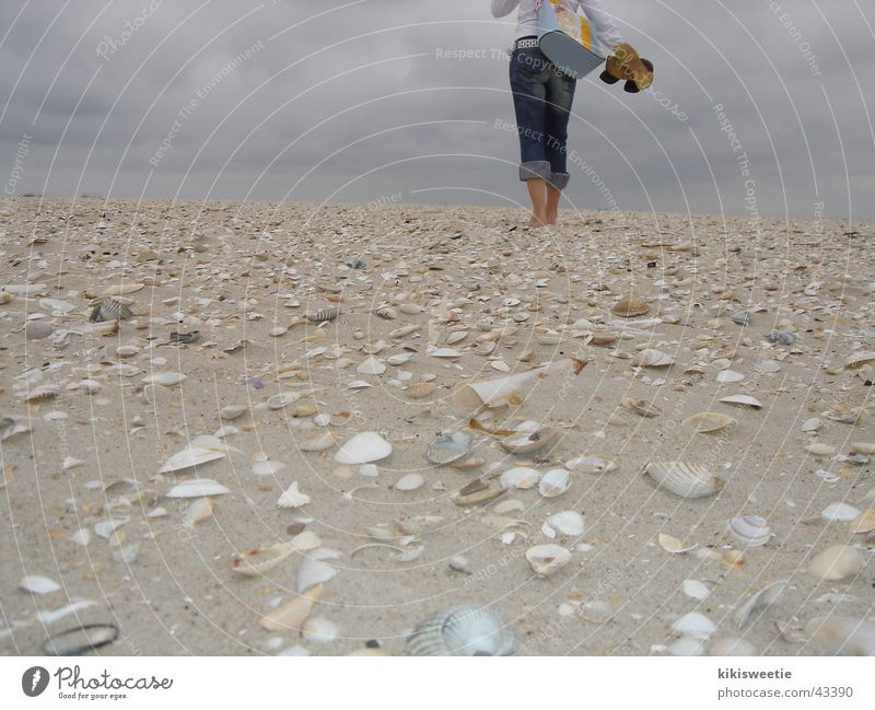 Strand Amrum Natur Sommer Strand Wolken Ferne Europa Spaziergang Muschel Nordsee Amrum