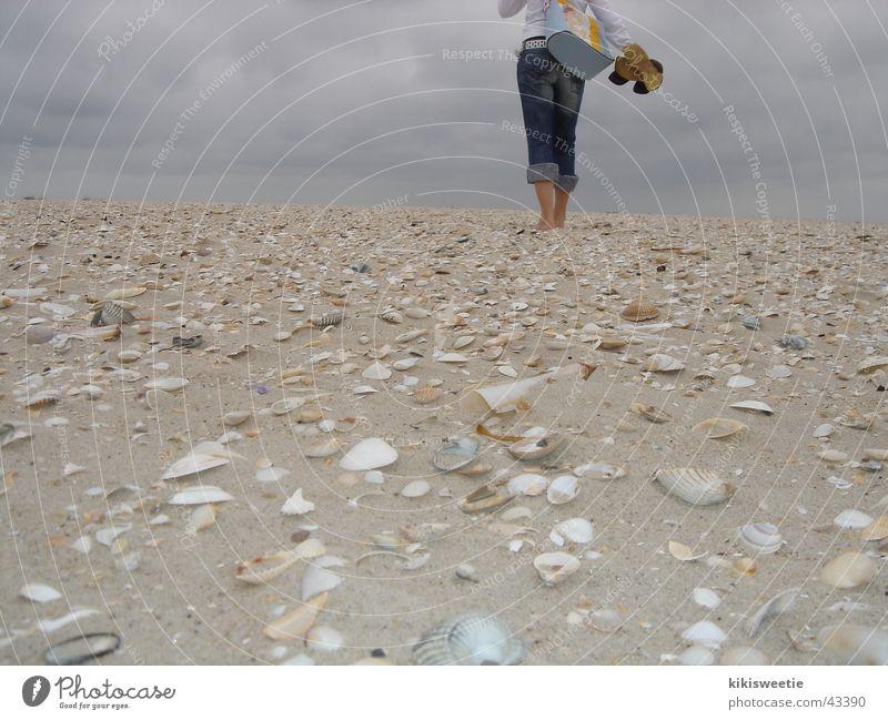 Strand Amrum Natur Sommer Wolken Ferne Europa Spaziergang Muschel Nordsee