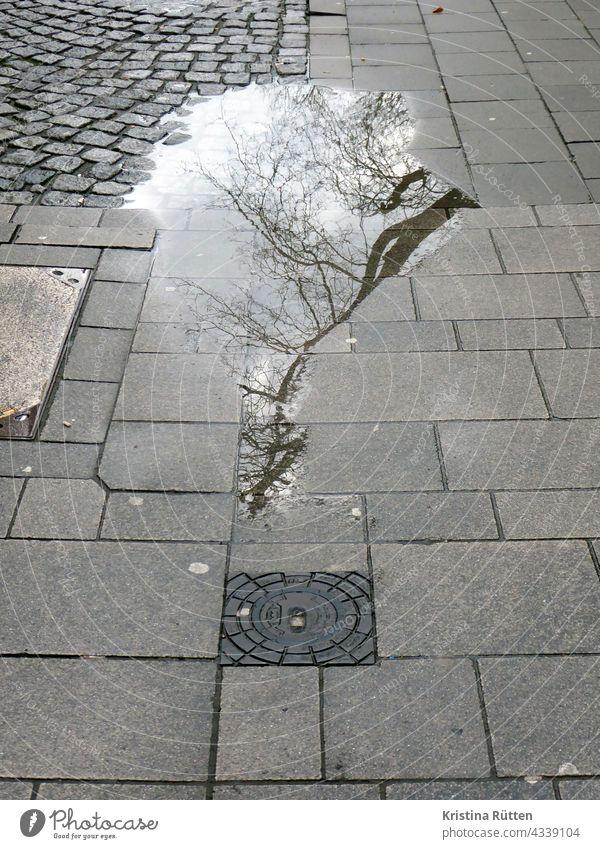kahler baum spiegelt sich in einer pfütze regenpfütze gehweg straße boden spiegelung reflektion spiegeln reflektieren regnerisch verregnet regentag regenwetter