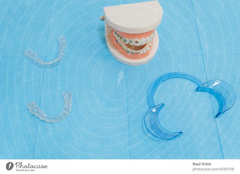 Zahnarztzubehör - Zahnersatzmodell mit Zahnspange Metall unsichtbar durchsichtig dental kieferorthopädisch Gesundheit Zahnmedizin medizinisch Mund Kiefer Model