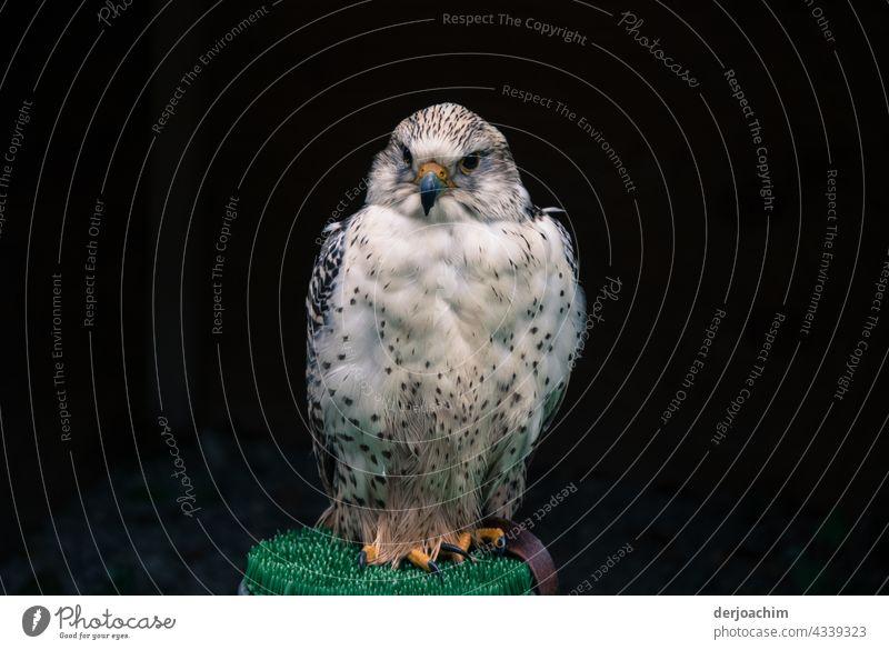 Besetzt / Dieser schöne Sitzplatz ist von mir besetzt. Vogel Natur Außenaufnahme Tag Tierporträt Menschenleer Farbfoto Blick Blick in die Kamera natürlich