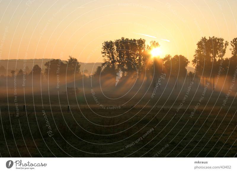 Avalon Nebel Morgen Sonnenaufgang Landschaft im Nebel Herbstlicht gold