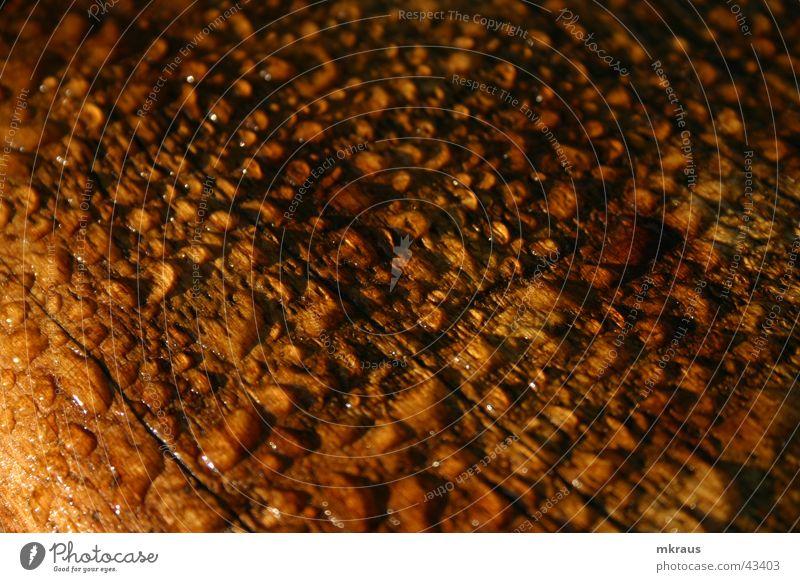 Nasses Holz Wassertropfen nass Tau