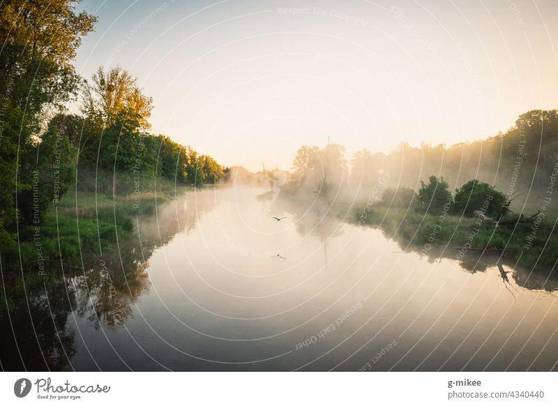 Ein Vogel über dem Fluss am Morgen Sonnenaufgang Gewässer Flug Nebel stille Ruhe Natur Landschaft Freiheit Reflexion & Spiegelung Morgendämmerung Wasser