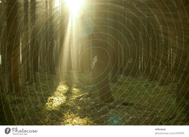 Zauberwald Wald Beleuchtung Nebel mystisch diffus