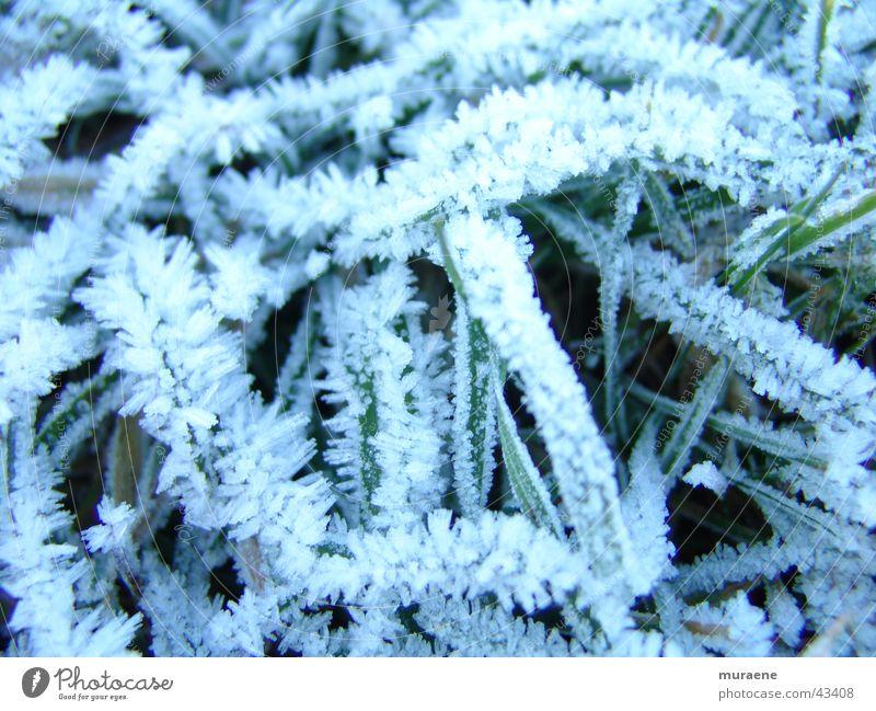 Reif Winter Schnee Gras Raureif