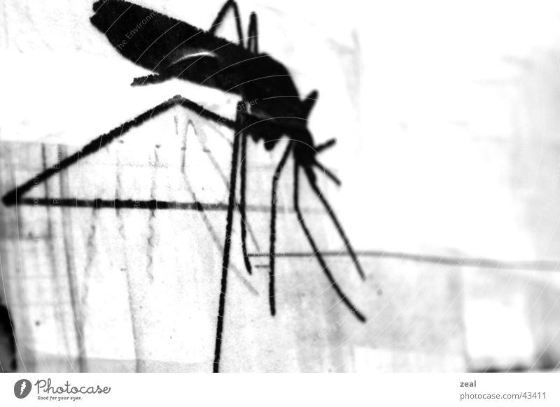 ::.. in - sekt ..:: Insekt Plakat Stechmücke schwarz weiß obskur Detailaufnahme Makroaufnahme trashig
