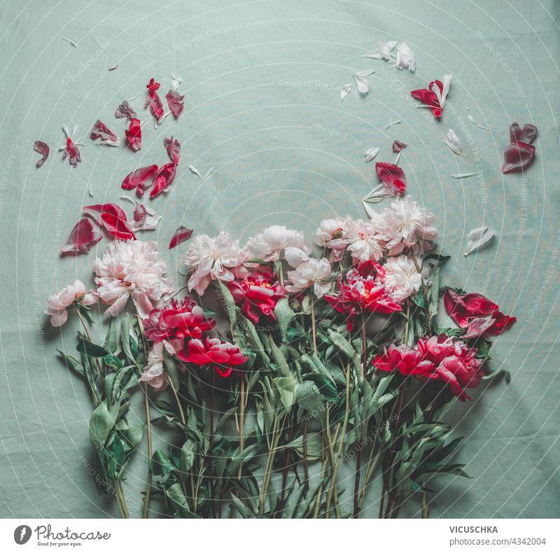 Schöne rote und weiße Pfingstrosen Blumenstrauß mit verstreuten Blütenblättern auf hellgrünem Stoff. Ansicht von oben. schön Haufen gestreut Licht Gewebe