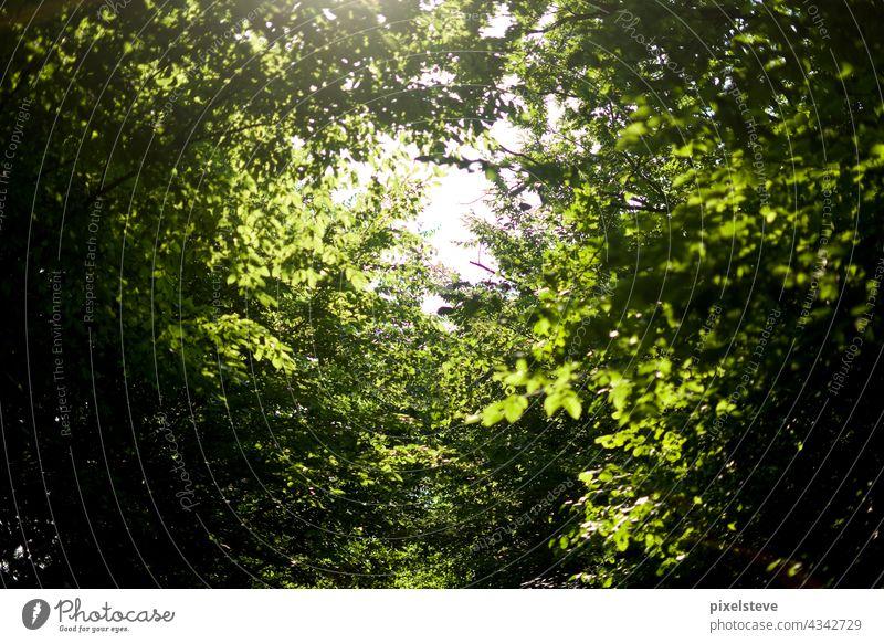 Blick durchs Blätterdach in einem Laubwald im Sommer Baum Wald bäume Klimawandel Umwelt blätter Natur blätterdach stamm baumstämme sauerstoff Pflanze hoffnung