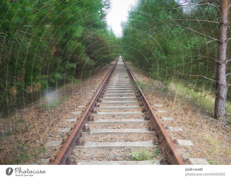 auf rostigen Schienen durch dicht bewachsenen Wald Gleise lost places Verkehrswege Doppelbelichtung Zahn der Zeit Verfall Endzeitstimmung Symmetrie Nadelbaum